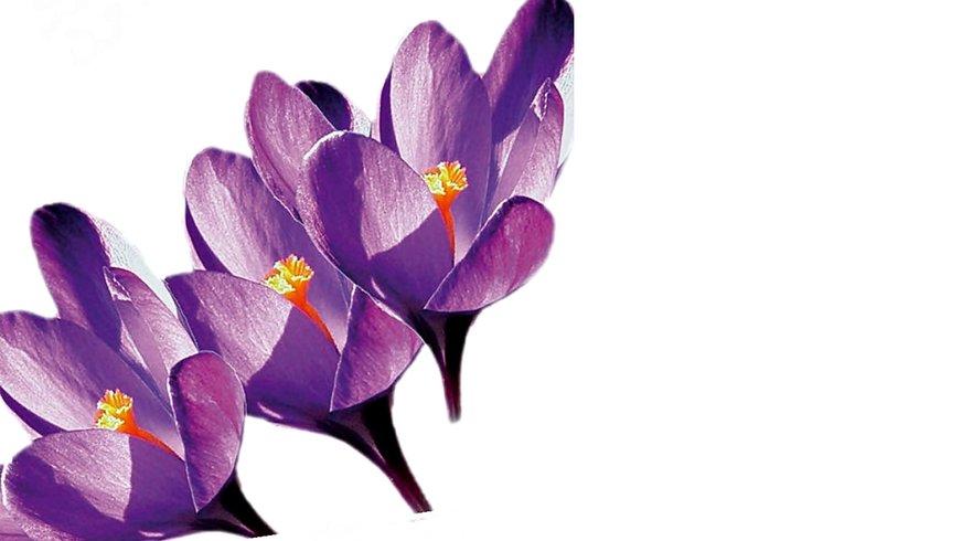 Blumen Frauen Frauentag